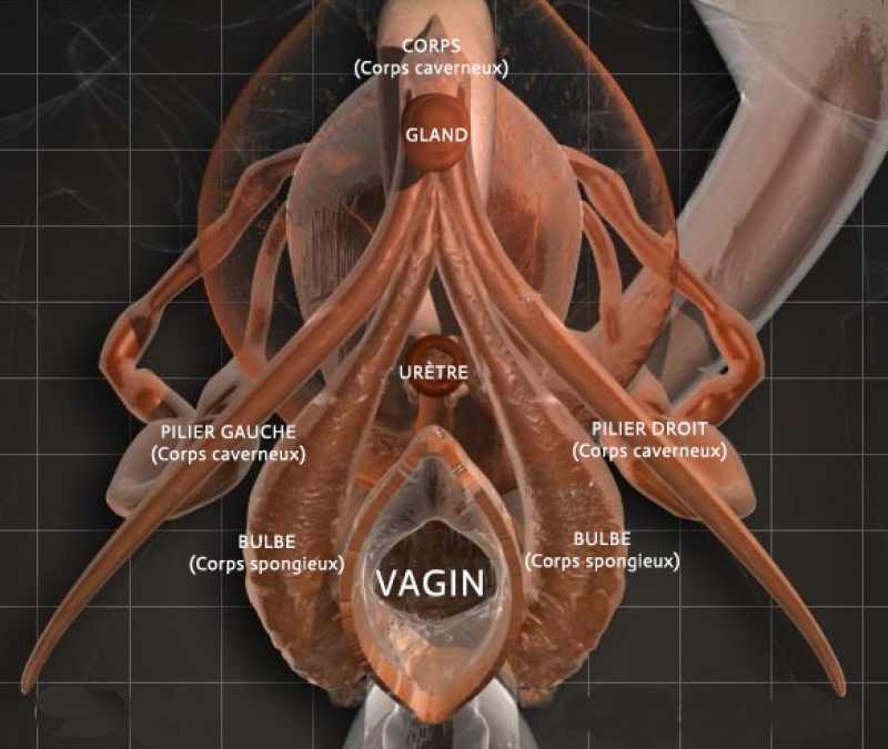 jouir clitoris fisting orgasme